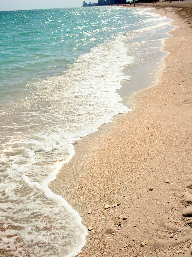 Download Strand fotografering för bildbyråer. Bild av solsken, palm - 503377