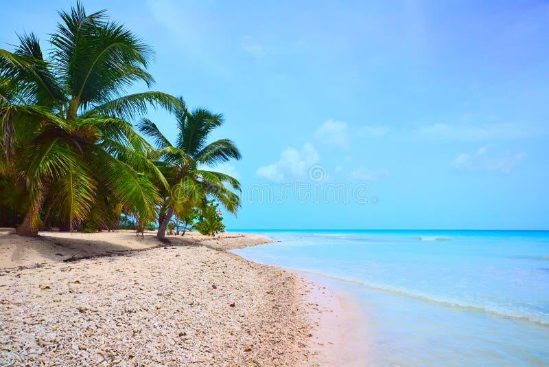strand av det karibiska havet fotografering för bildbyråer