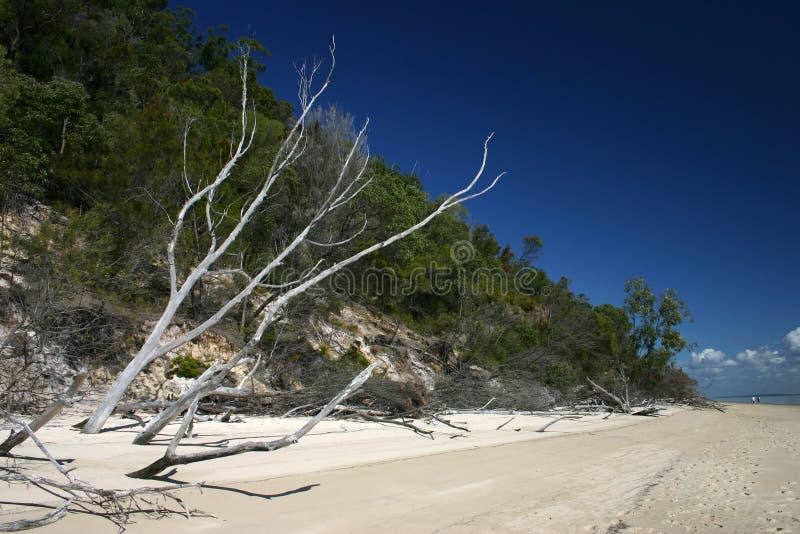 Strand-Baum-Skelett lizenzfreie stockbilder
