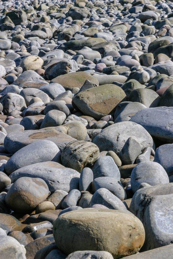 Strand bedeckt mit großen grauen glatten Kieseln oder Steinen lizenzfreie stockfotos