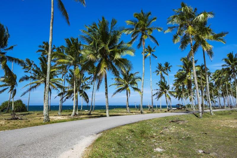 Strand dat door kokospalm onder heldere zon bij zonnige dag wordt omringd stock foto