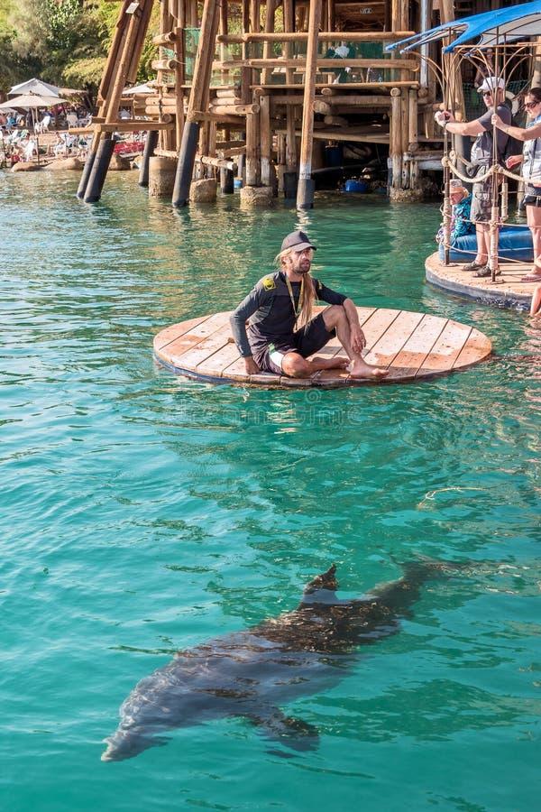 Strand-Delphin-Riff in Elat stockbild