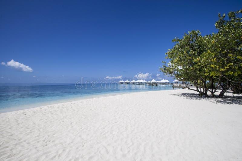 Strand in den Maldives lizenzfreie stockfotos