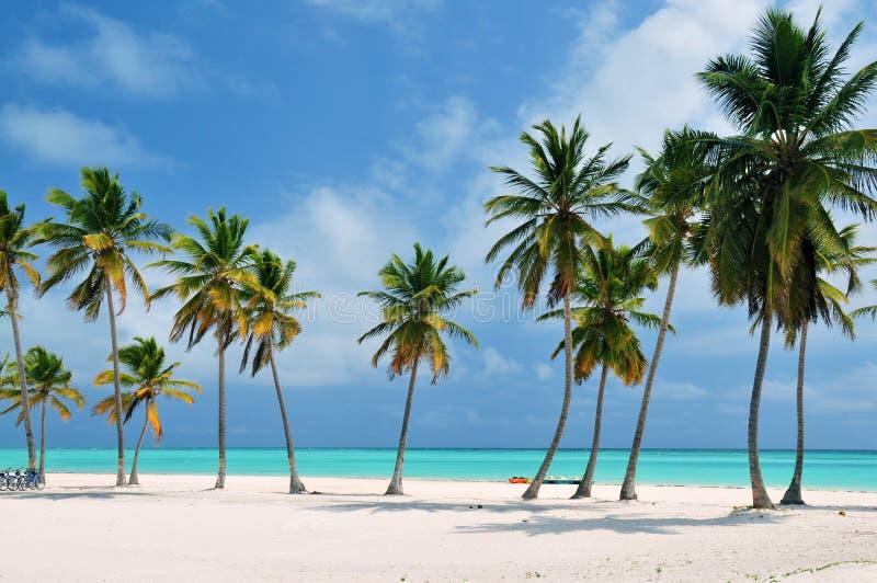 Strand in Dominicaanse Republiek stock afbeelding