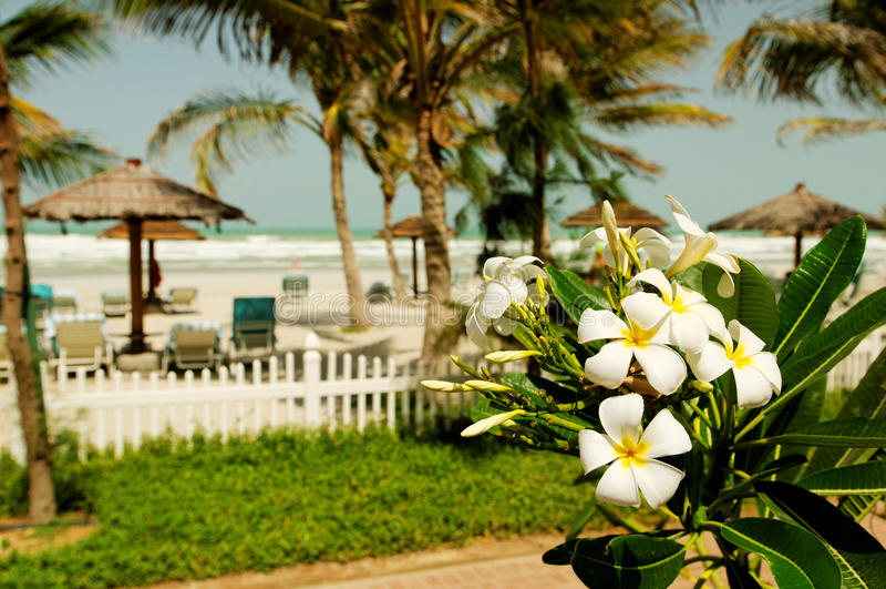 Strand in Doubai stock afbeelding