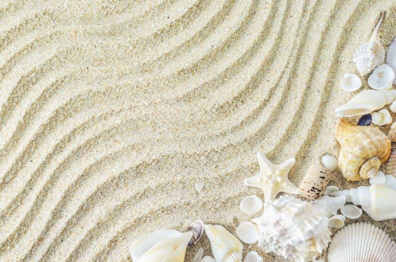 Strand en de Zomerachtergrond - zeester en zeeschelpen op witte sa royalty-vrije stock foto