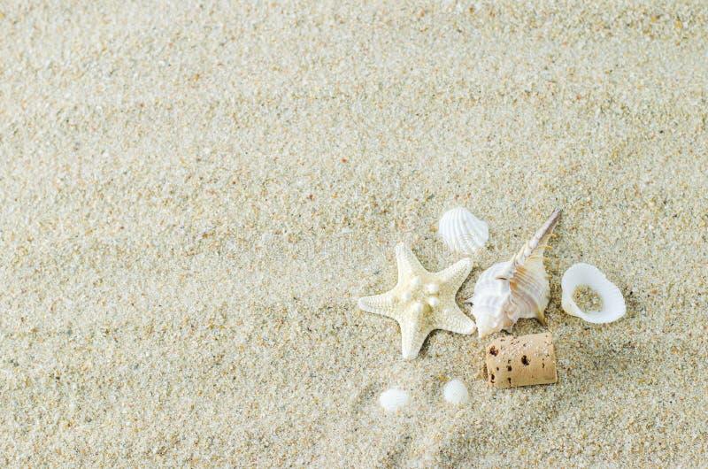 Strand en de Zomerachtergrond - zeester en zeeschelpen op witte sa royalty-vrije stock afbeelding