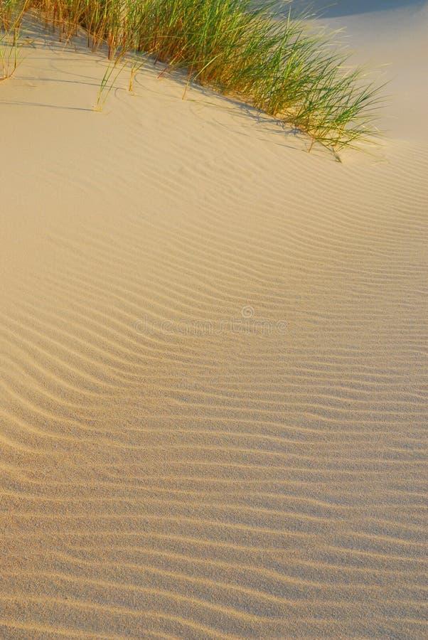 Strand en duinenachtergrond stock foto