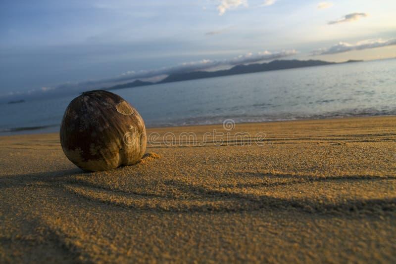 Strand en kokosnoot stock fotografie