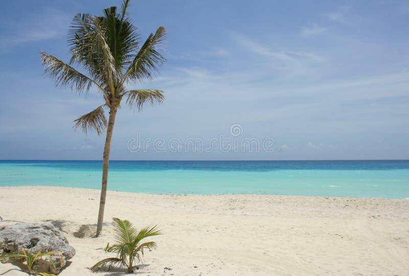 Strand en palm stock afbeelding
