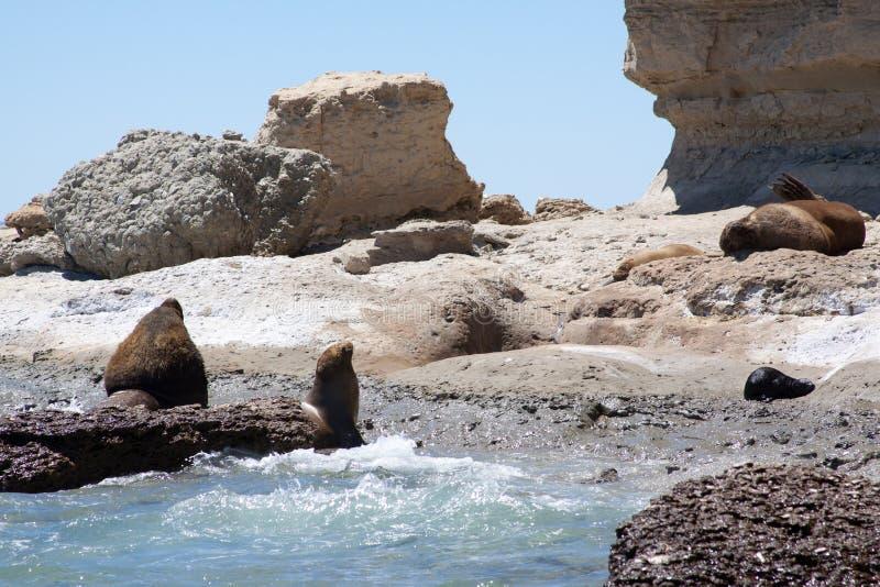 Strand en Zeeleeuwen royalty-vrije stock afbeelding