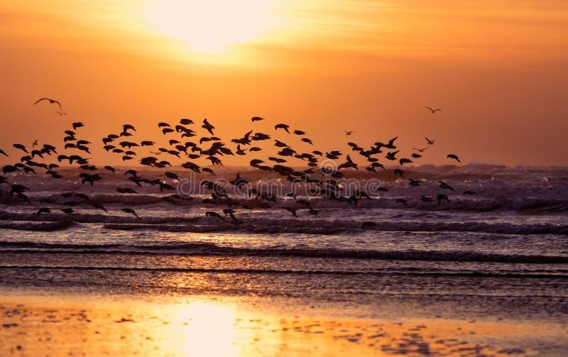 Strand en zonsondergang royalty-vrije stock foto