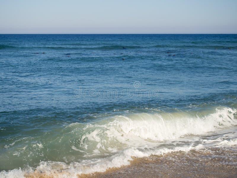 Strand för Cape Cod nationell kustCoastguard royaltyfri fotografi