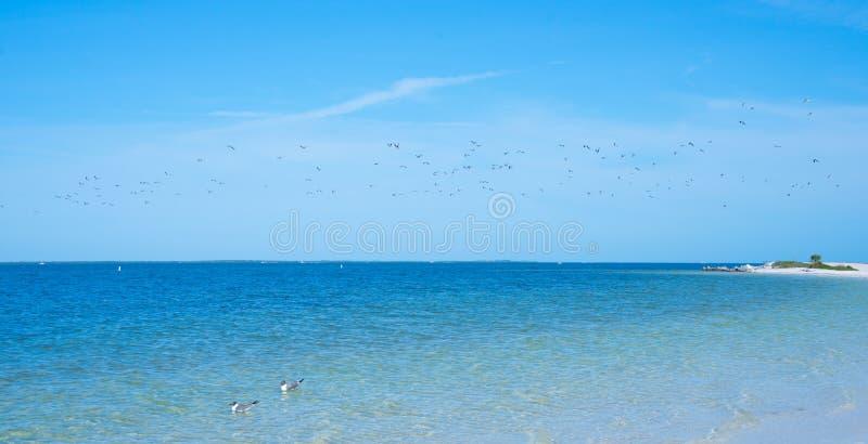 Strand Floridas Palm Harbor lizenzfreies stockfoto