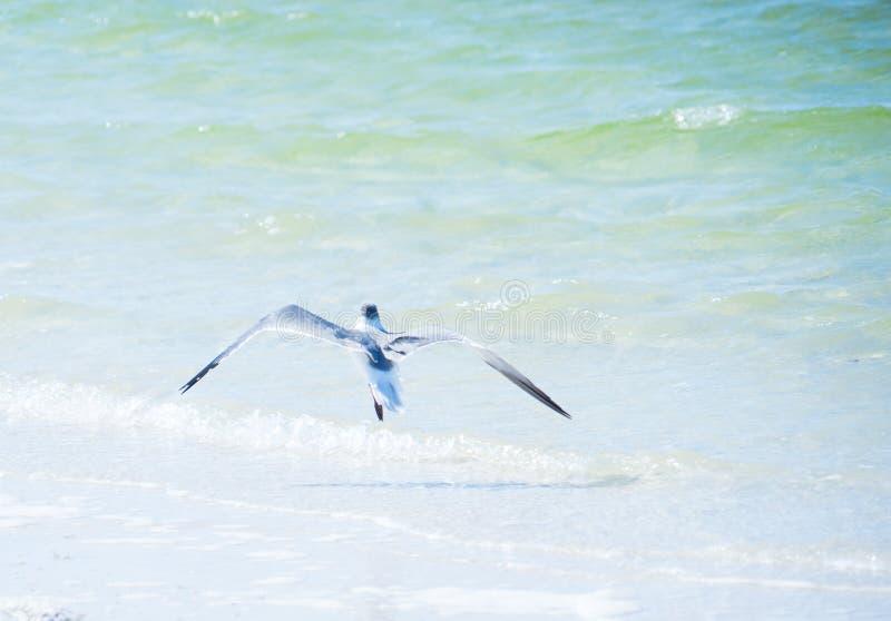Strand Floridas Palm Harbor lizenzfreie stockfotografie