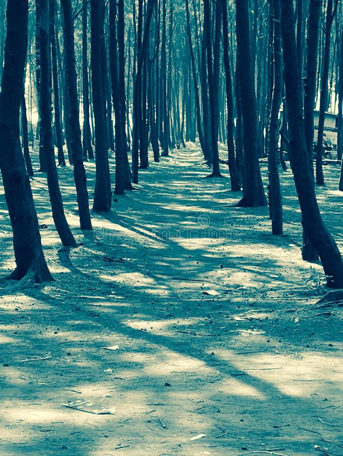 Strand Forest Pathway stock foto