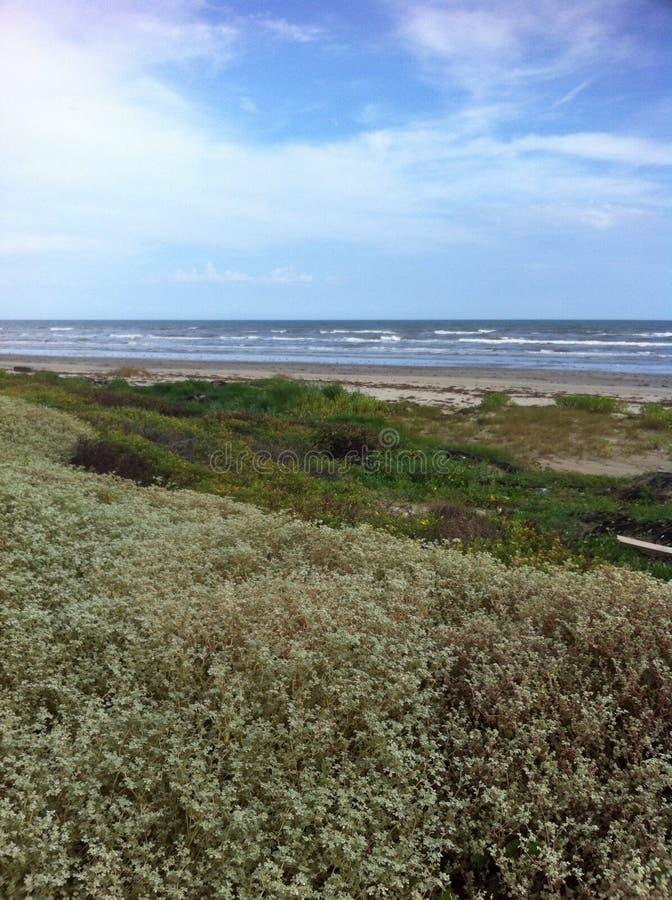 Strand in Galveston, TX royalty-vrije stock foto's