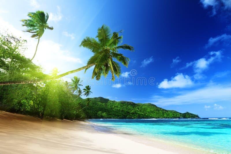 Strand i solnedgångtid på den Mahe ön i Seychellerna royaltyfri foto