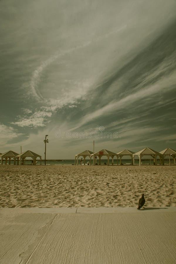 Strand i Tel Aviv i Israel royaltyfri foto