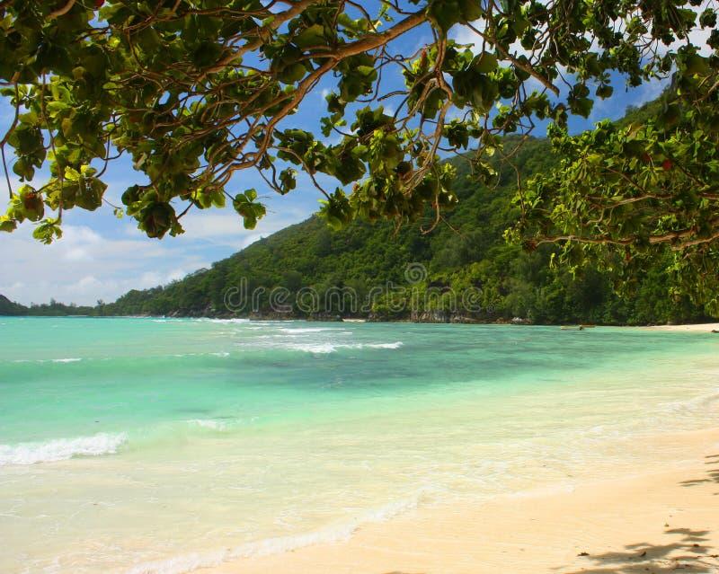 strand jungfruliga seychelles arkivbild