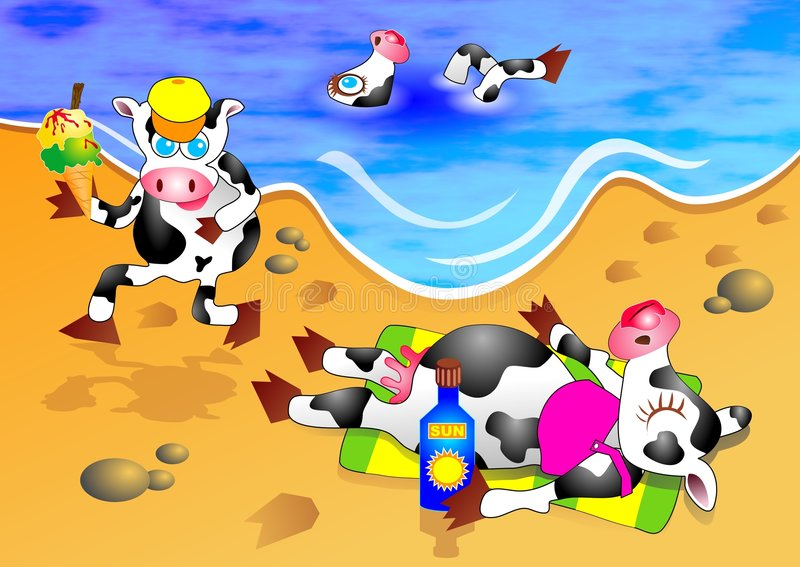 Strand-Kühe stockfotos