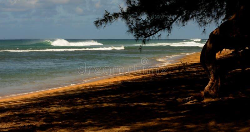 strand kauai arkivfoto