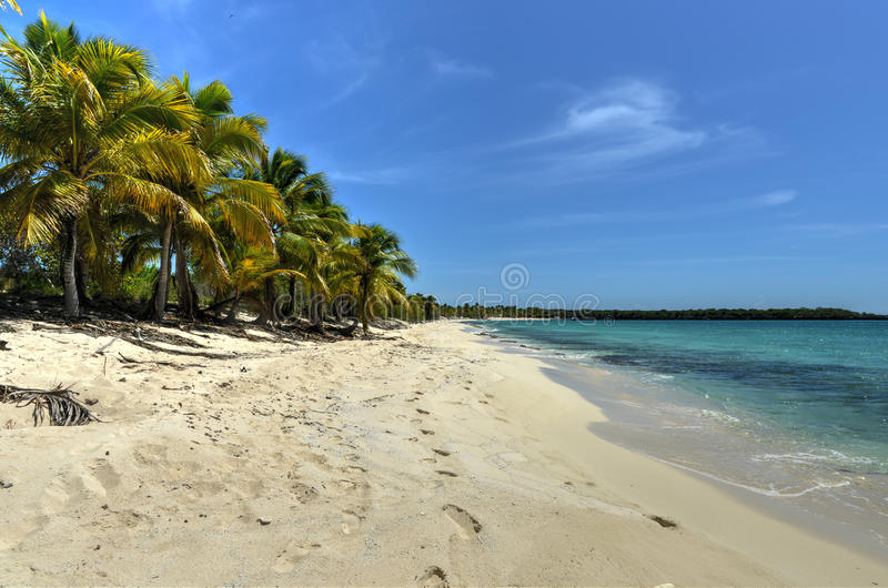 Strand längs Isla Catalina, Dominikanska republiken arkivfoto