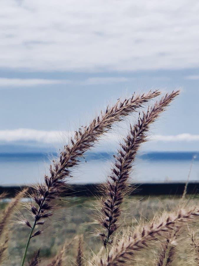 strand laguna arkivfoto