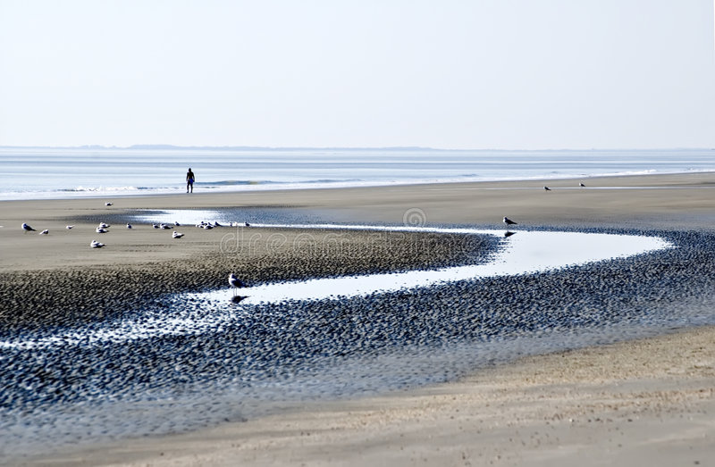 Strand at Low Tide stock foto's
