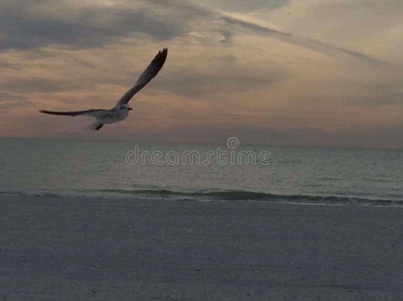 Strand-Luftraumüberwachung lizenzfreie stockfotos