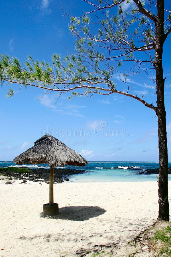 Strand. Mauritius. stock foto