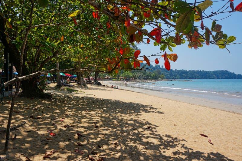 strand med något personer och blått hav royaltyfria foton