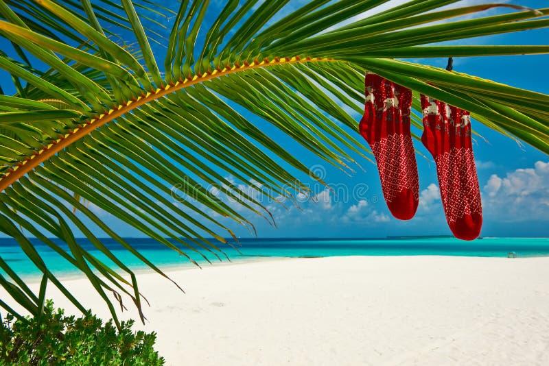 Strand med palmträdet på jul arkivbild