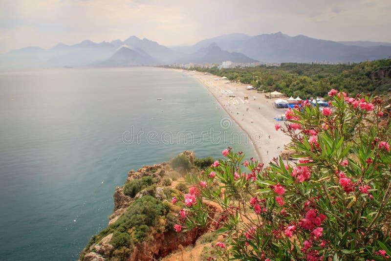 Strand med rosa blommor, berg och ljust rent turkosvatten royaltyfri foto