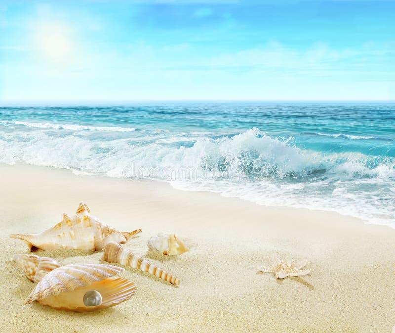 Strand med skal och pärlan royaltyfri bild