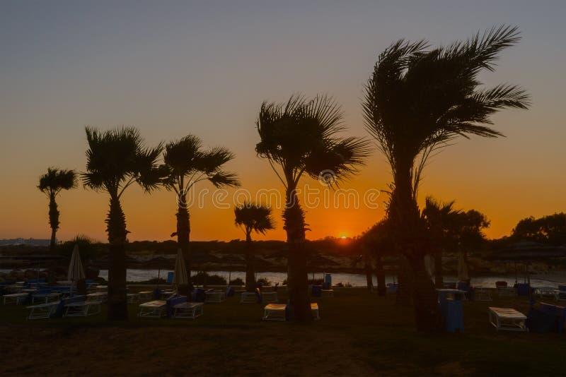 Strand med solsängar och palmträd royaltyfri fotografi