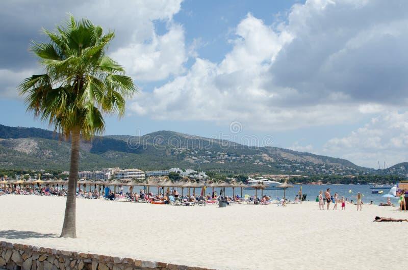 Strand met boom stock afbeelding