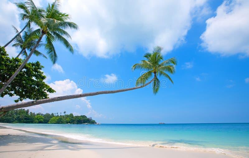 Strand met glasheldere blauwe wateren en palm royalty-vrije stock fotografie
