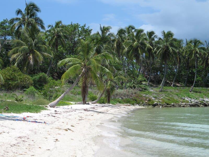 Strand met palmen royalty-vrije stock afbeeldingen