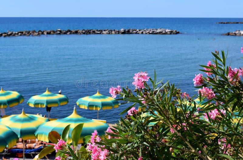 Strand met paraplu's en oleanders stock afbeeldingen