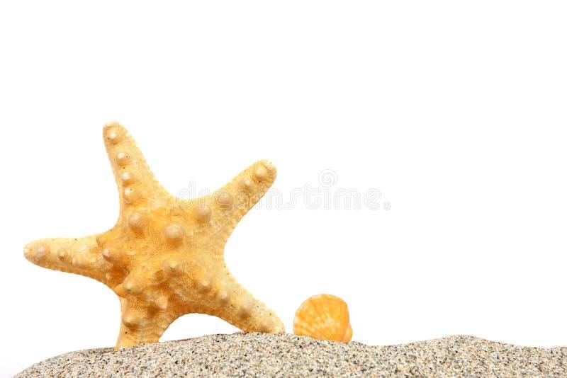 Strand met zand en zeester stock fotografie