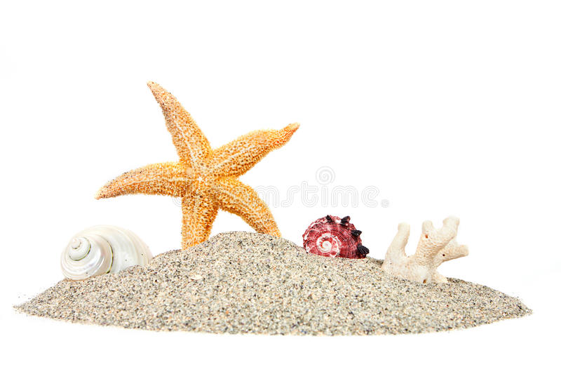 Strand met zandzeester en shells royalty-vrije stock foto