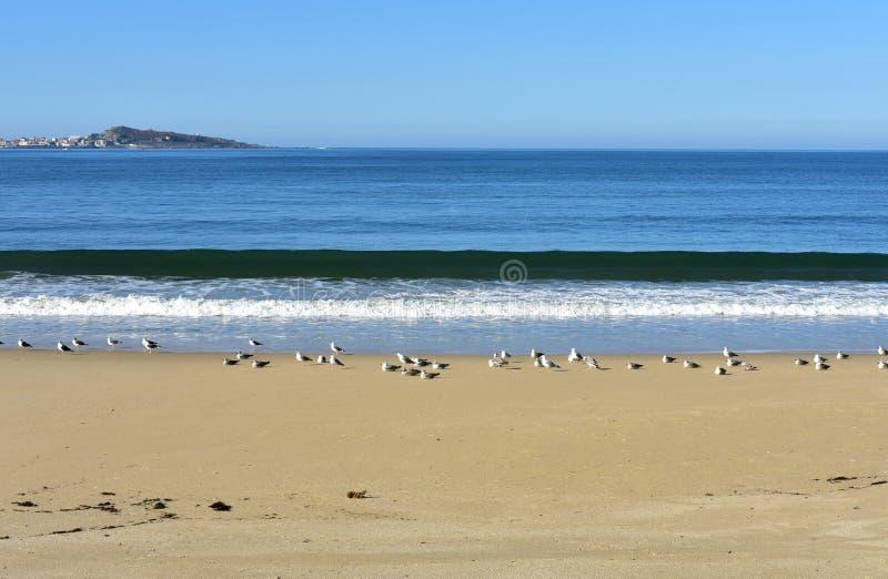 Strand met zeemeeuwen en golven Blauwe overzees met schuim, zonnige dag, blauwe hemel Galicië, Spanje royalty-vrije stock afbeeldingen