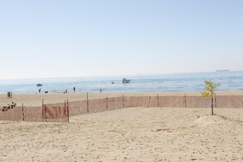 Strand mit einem einzelnen Baum stockfoto