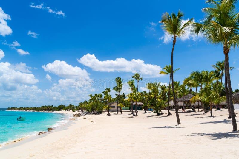 Strand mit Palmen bei Catalina Island in der Dominikanischen Republik stockfotos