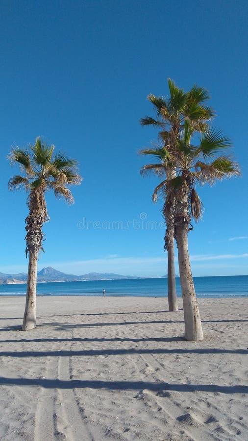 Strand mit Palmen gegen blauen Himmel stockbilder