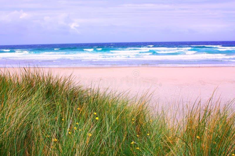 Strand mit wildem Gras stockfotografie