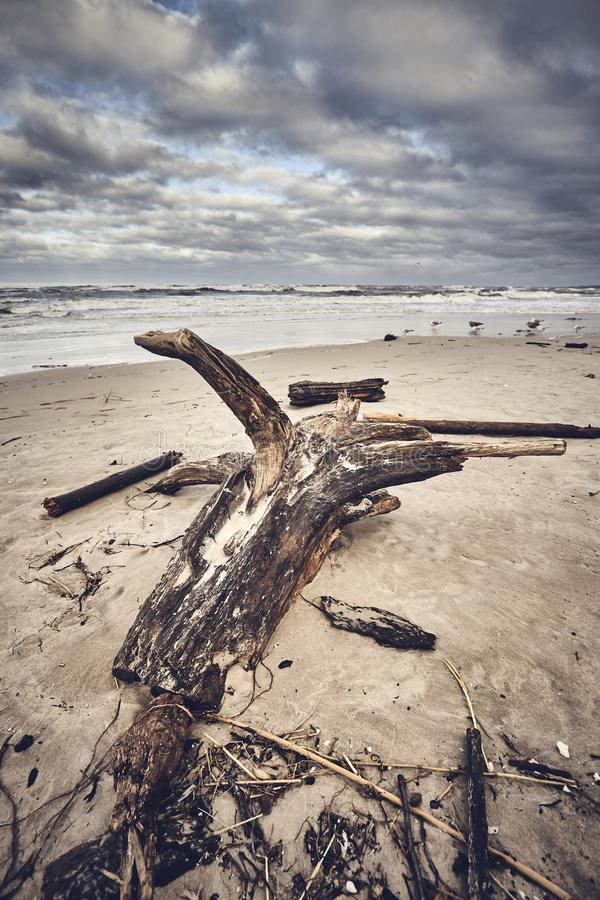 Strand nach einem Sturm mit Stumpf und Holz stockfotografie