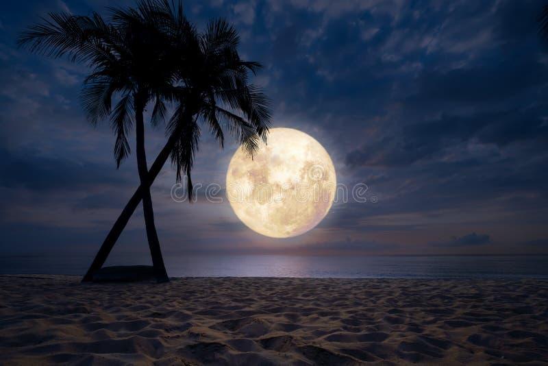 Strand in nachthemel, volle maan royalty-vrije stock foto's