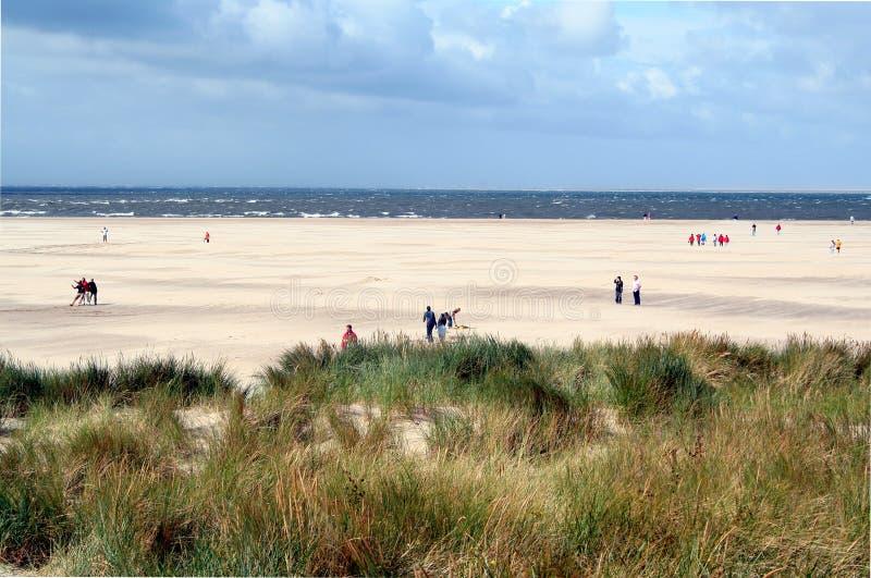 strand och dyn i Texel royaltyfri foto